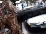 un arbol cayo sobre un auto tras las intensas lluvias en la habana