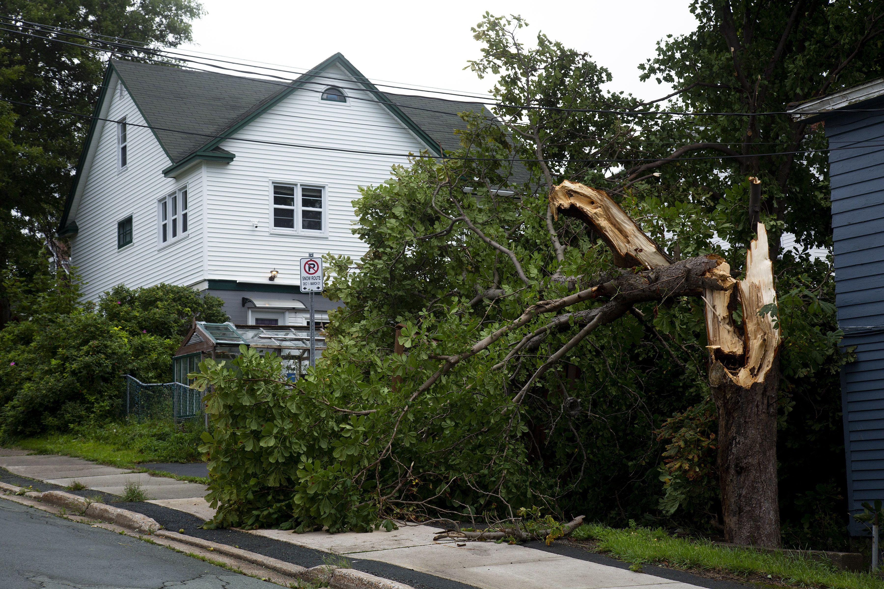 huracan larry deja danos y apagones en terranova