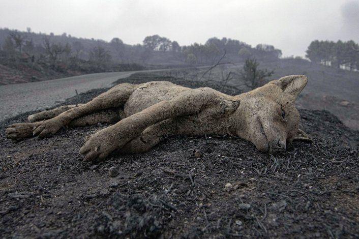 Alerta en Cerdeña, Italia, por extensos incendios forestales