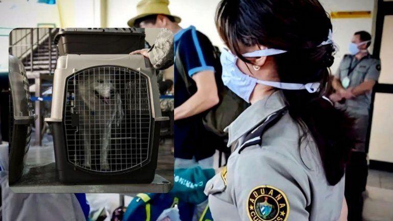 EE.UU. prohíbe la entrada a perros procedentes de Cuba