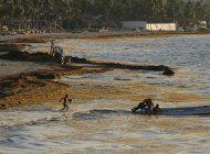 costa caribena de mexico sufre azote del sargazo
