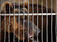libano envia osos a eeuu para ser soltados en naturaleza