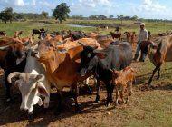 el gobierno cubano anuncia mas de 60 medidas para producir alimentos, incluida la venta liberada de la carne de res