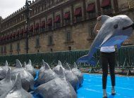 mexico pone fin a zona libre de pesca para vaquitas marinas