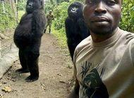 muere en congo una gorila famosa que poso para una selfie