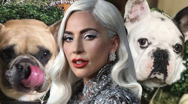 Lady Gaga ofrece medio millón de dólares como recompensa por sus perros