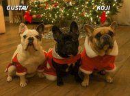 recuperan los 2 perros robados de lady gaga