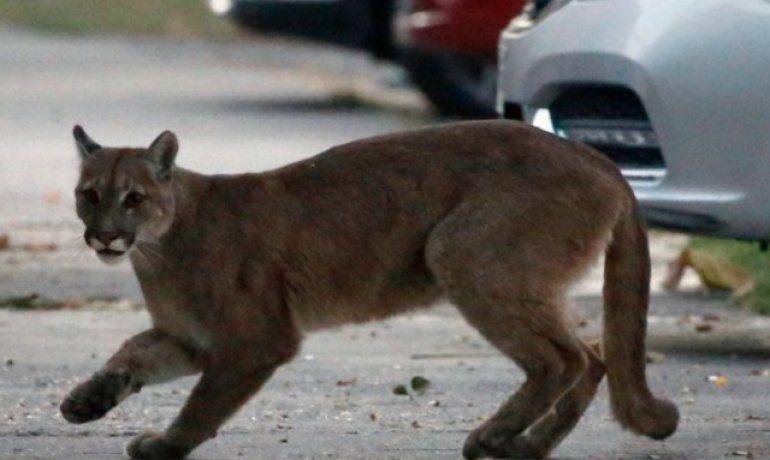 Coronavirus: las imágenes de cómo los animales se están tomando las calles de algunas ciudades del mundo confinadas por la pandemia