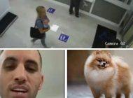 miami: aparece el perrito robado, pero no era de lenier