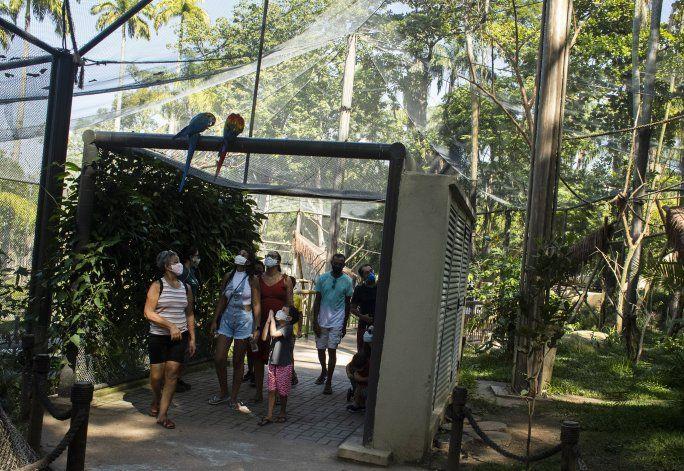 La última guacamaya salvaje de Río está sola y busca el amor