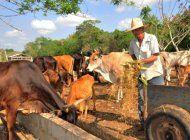 en medio de un fuerte crisis economica y social el regimen cubano autoriza a ganaderos la venta liberada de leche y sus derivados