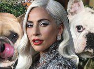 lady gaga ofrece medio millon de dolares como recompensa por sus perros