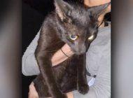 hallan vivo a gato desaparecido en el colapso del edificio champlain tower en surfside
