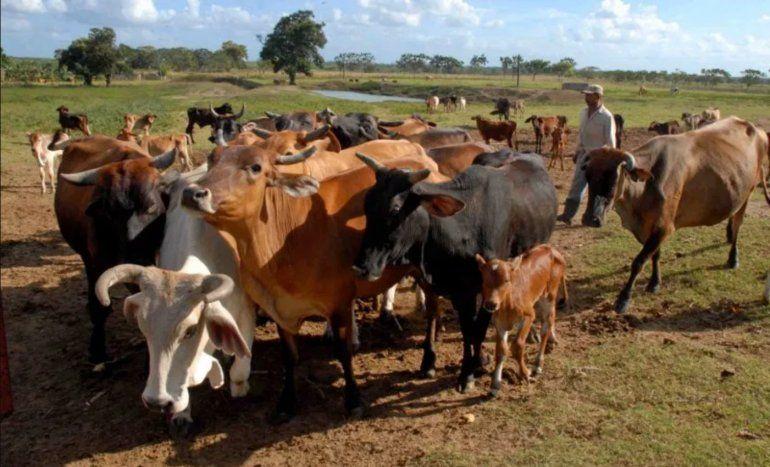El Gobierno cubano anuncia más de 60 medidas para producir alimentos, incluida la venta liberada de la carne de res