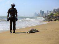 sri lanka: aparecen tortugas muertas tras fuego en un barco