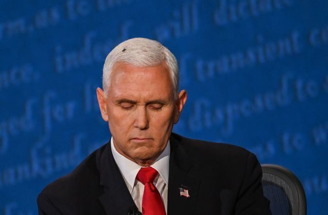 Una mosca se sentó sobre la cabeza de Mike Pence durante el debate vice-presidencial por dos minutos