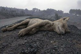 alerta en cerdena, italia, por extensos incendios forestales