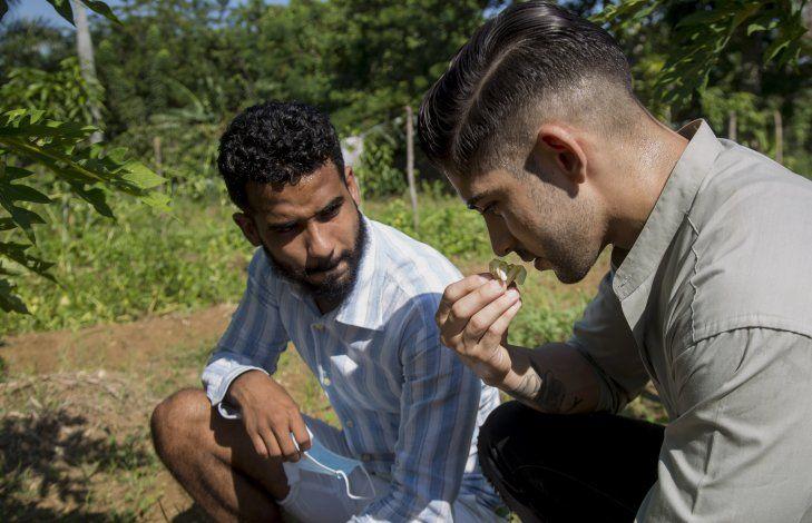 Jóvenes cantineros cubanos crean tragos con plantas nativas