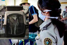 ee.uu. prohibe la entrada a perros procedentes de cuba