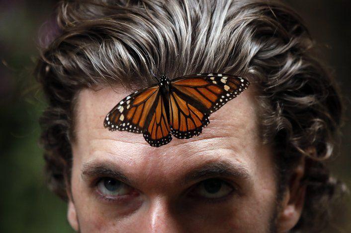 México: Población de la mariposa monarca disminuye 26%