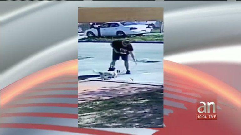 Captado en cámara el momento en que una mujer roba una perrita frente a una casa del Este de Hialeah