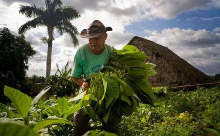 La Cuba del recuerdo | El tabaco en Cuba hasta el 1958