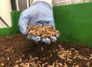 empresas europeas promueven insectos comestibles