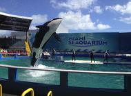 comision de miami dade designa nueva compania para que maneje el miami seaquarium