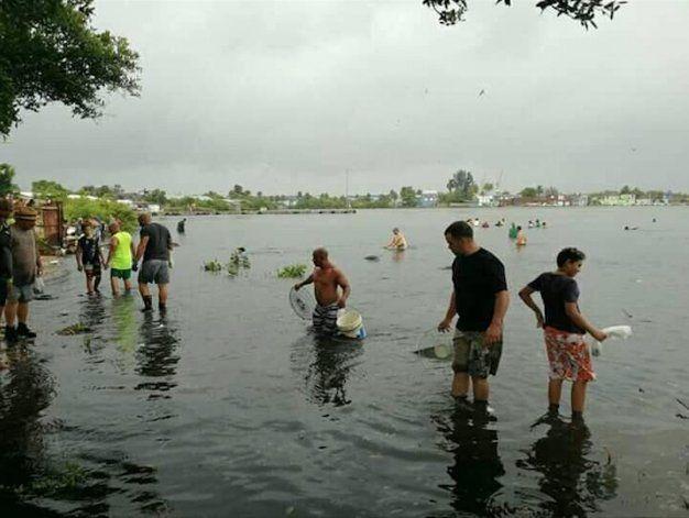 Llovieron peces en Cienfuegos tras paso de Laura